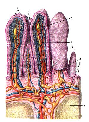 очищение организма лимфы